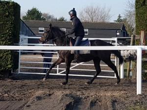 Zebedee colt in the outdoor ring