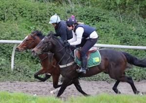 Spring Romance (nearside) working at home yesterday