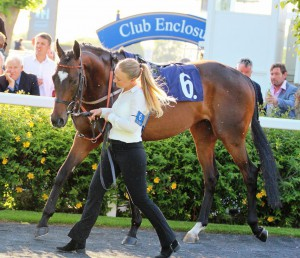 Blaze Of Hearts - runs at Windsor