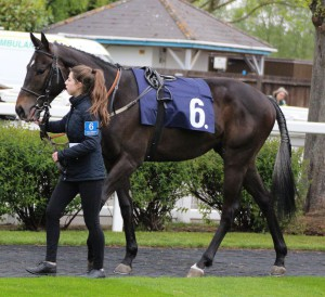 Spring Romance - runs in the 6.50 at Windsor