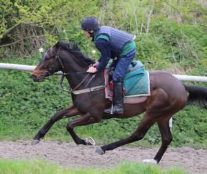 Badenscoth - runs at Kempton