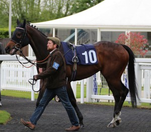 Artscape - course and distance winner