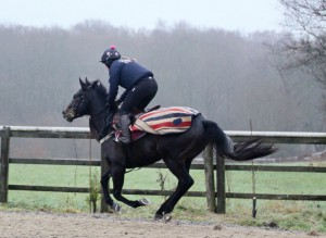 Spring Romance - on the gallops last Wednesday