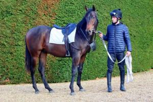 Garswood colt with Jack Duern (orig) 10 Nov 18