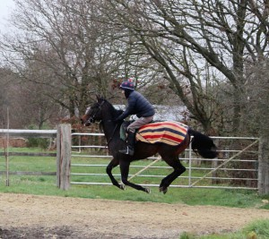 Garswood colt - first time on the gallops