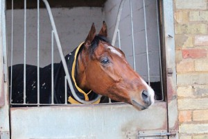 Sir Prize in his box (web site)