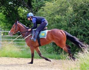 Lordsbridge Boy - run at Windsor