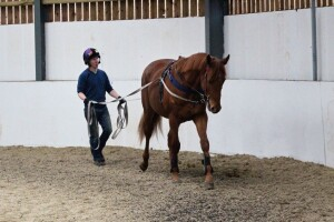 Tamayuz colt being long-reined earlier this week