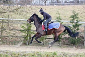"""""""Woody"""" having first canter of the year"""