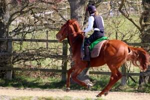 Tamayuz 2yo first time on the gallops
